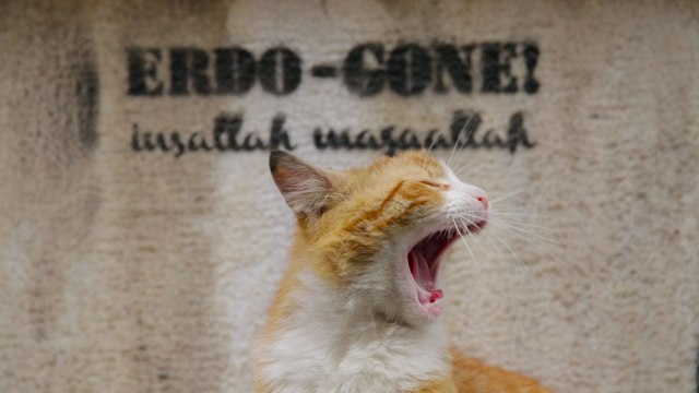 kedi-ergo-gone